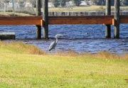 crane-Orange_Beach-Alabama-9bbfe74e9dc04821b21d9f44a808fe82_c
